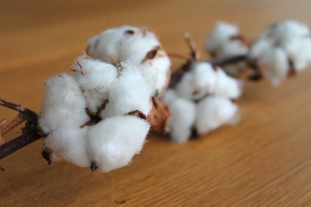 綿のズームアップ