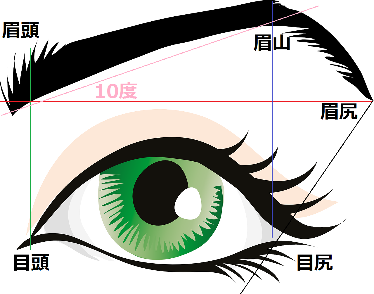 目と眉毛のイラスト