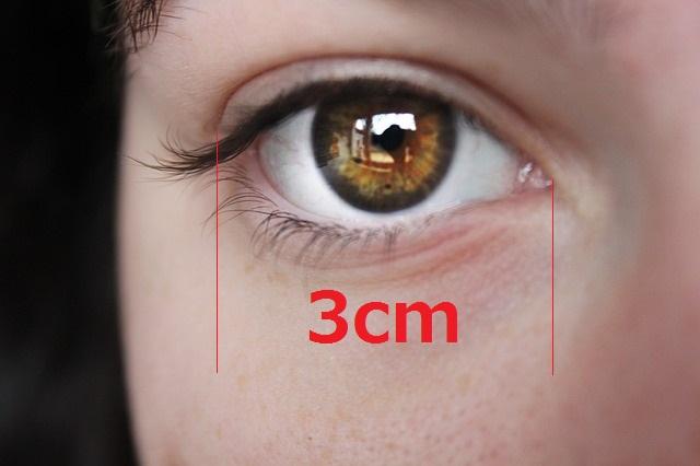 目の拡大写真