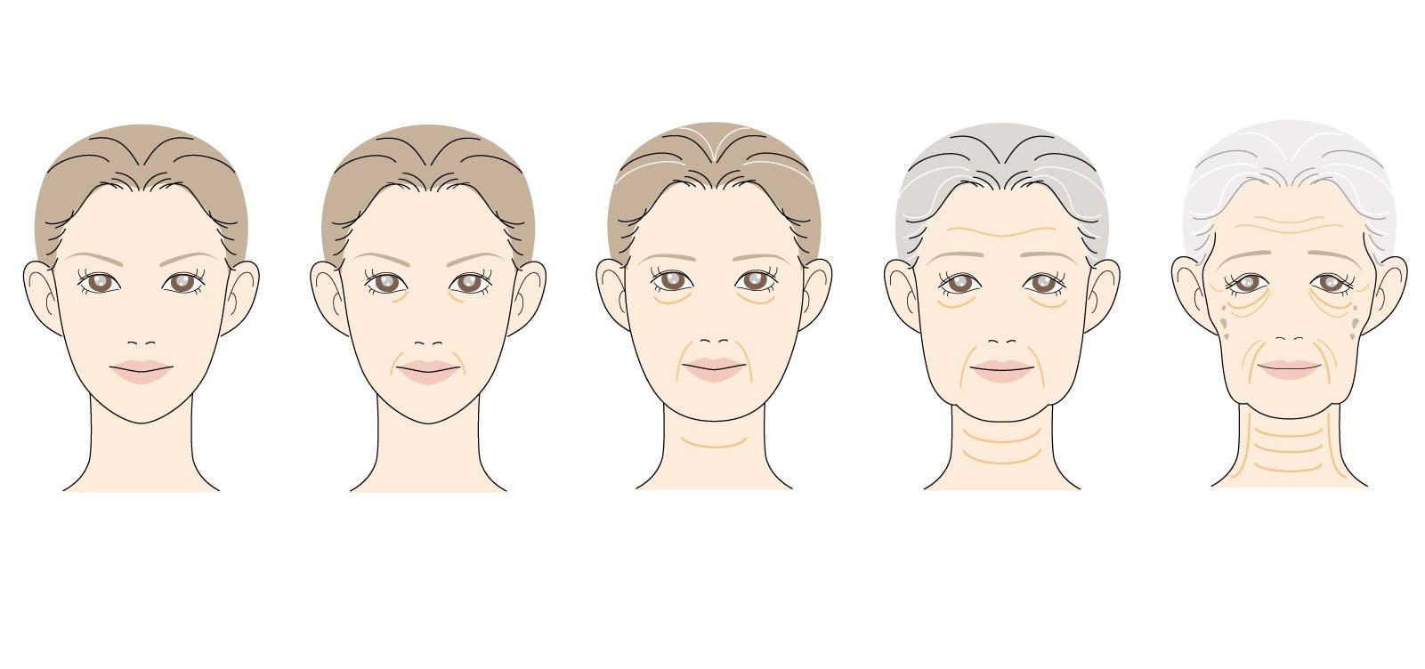 女性の老化していく過程を示したイラスト