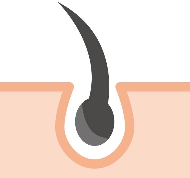 毛の成長期