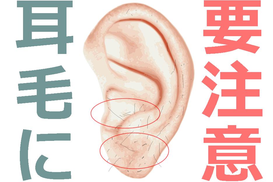 耳毛のイラスト