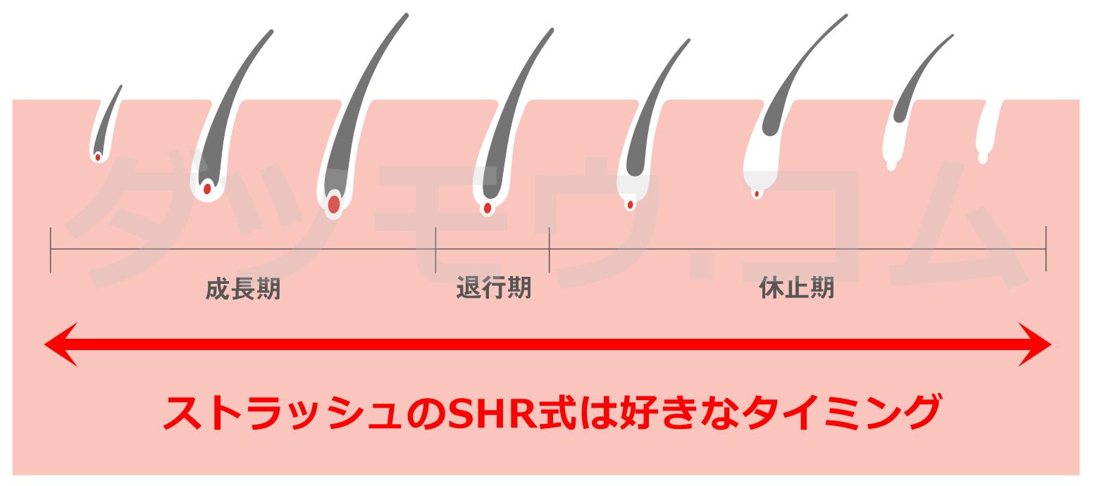 毛周期の照射解説