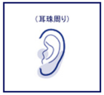 耳の照射範囲