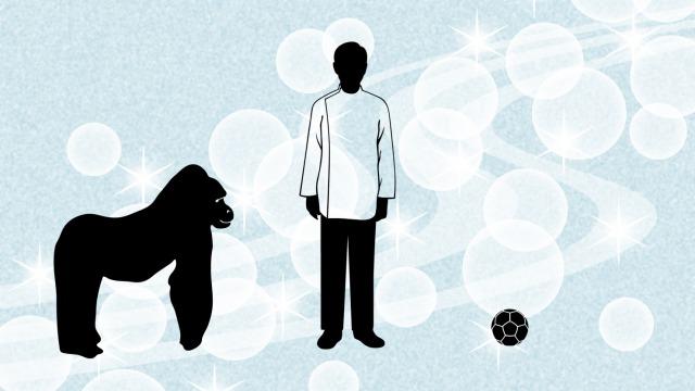 ゴリラと医師とサッカーボール