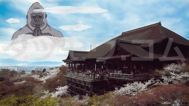 ゴリラと清水寺